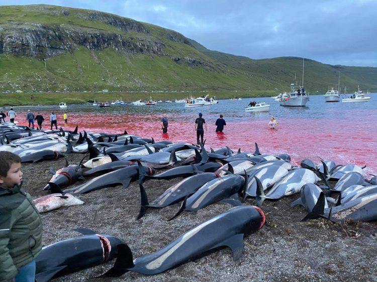 (Foto: SITA/AP/Sea Shepherd)